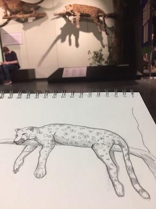 Zoologisches-Museum-Hamburg-Zeichenworkshop-2019-1