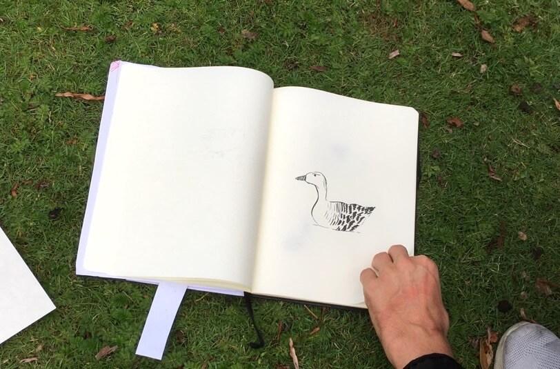 Entenvögel-zeichnen-im-Eichenpark-Hamburg-2020-6