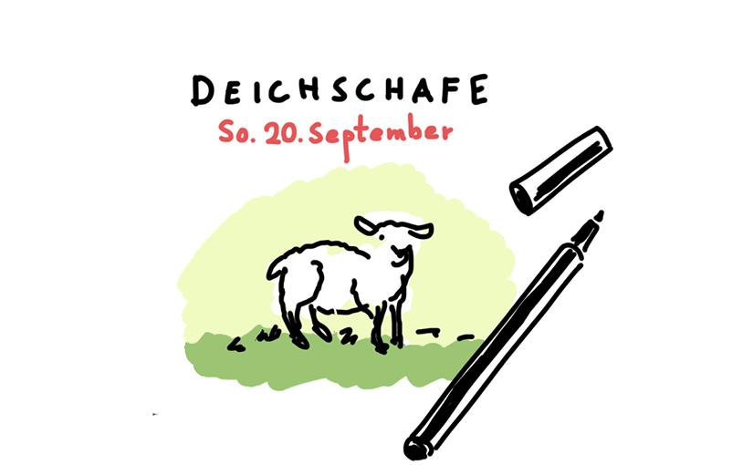 Sonntag 20.09 – Deichschafe zeichnen