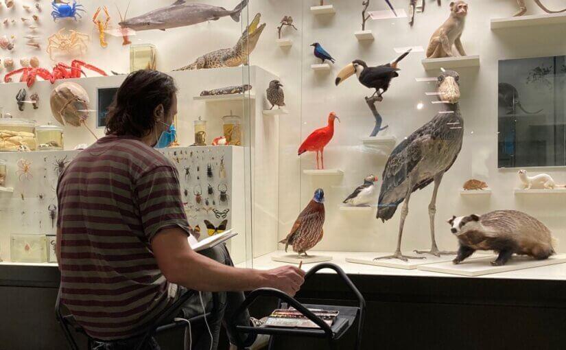 Zeichnen im Zoologischen Museum